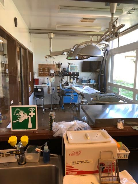 Auto Clave View of Surgery